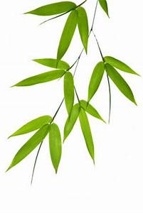 Playing Bamboo Leaves - iamronen