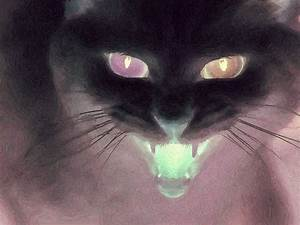 """News: I am directing """"Now the Cats With Jewelled Claws"""" by ..."""