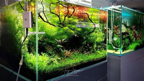 Japanese Aquascape by 90 Days Update On The 60cm Aquascape At Zoo Flottmann