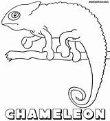 Chameleon Coloring Pages Print sketch template
