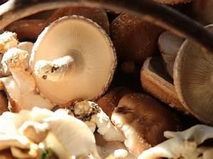 Shiitake Pilze Braten : waldviertler pilzgarten knusprige shiitake ~ Watch28wear.com Haus und Dekorationen