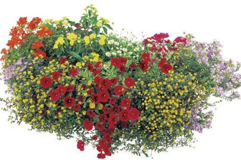 So Klappt Es Mit Der Blütenpracht