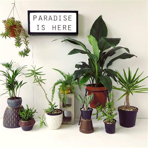 our top 7 unkillable indoor plants the desk plants apartmentdiet