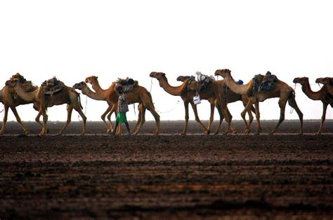 etiopia dancalia terra degli afar viaggi nel mondo
