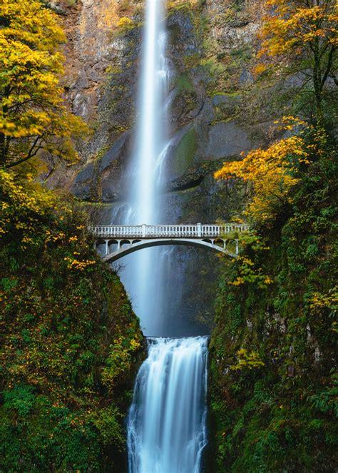 bridge   trees photo  waterfall image