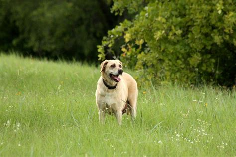 Top 10 Most Popular Dog Breeds In America