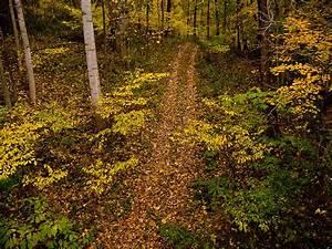 Eastern Deciduous Forest  U S  National Park Service