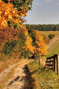 Fall Autumn Country Road