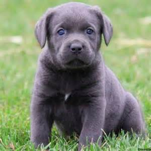 what s the most common dog breed in your country