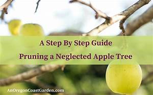 A Step By Step Guide To Pruning A Neglected Apple Tree