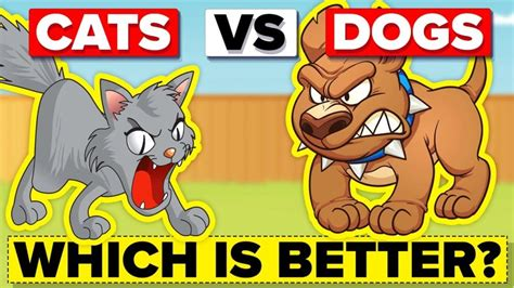 cats better dogs than why pet dog which