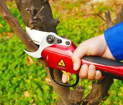 coupe branche electrique pas cher