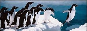 Pingouin Sur La Banquise : le pingouin curieux sur la banquise de l 39 it ~ Melissatoandfro.com Idées de Décoration