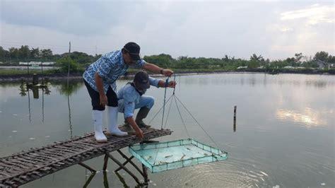 Harga Rc Excavator Di Indonesia petambak ikan di sambas terima bantuan 3 unit excavator