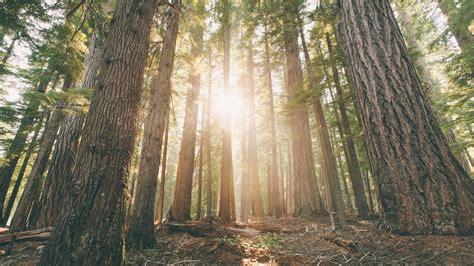 Wallpaper Hamaker Campground, Forest, Woods, Oregon, 4k
