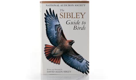 the sibley guide to birds points in focus photography