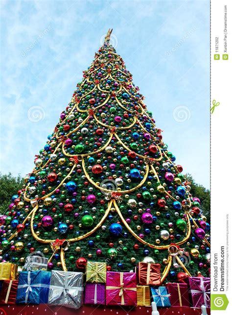 christmas tree stock photography image