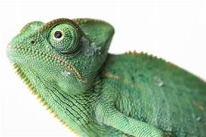 Große Reptilien Für Zuhause : reptiliendoktor krankheiten bei reptilien ~ Lizthompson.info Haus und Dekorationen