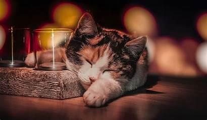 Cat Sleeping Glass Wallpapers Animals Drinking Resolution