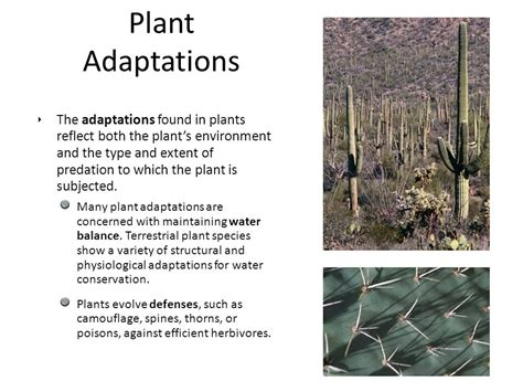 Adaptations An Adaptation (or Adaptive Feature) Is An