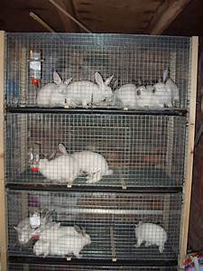Whether You Are Raising Rabbit Cages For An Exhibition