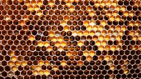 honeycomb wallpapers pattern hq honeycomb pictures 4k