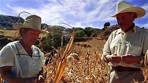 The Mexican Corn Market - Global Farmer Network™