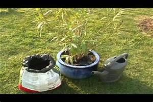 Kamelie Gelbe Blätter : oleander hat gelbe bl tter was tun ~ Lizthompson.info Haus und Dekorationen