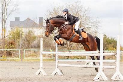 Horse Rider Bay Jump Young Jumping Hurdle
