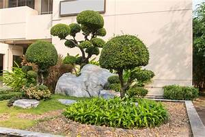 Kleine Bäume Für Vorgarten : baum f r den vorgarten diese zeigen hier wirkung ~ Michelbontemps.com Haus und Dekorationen