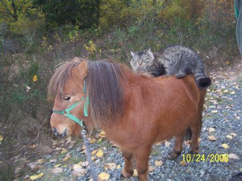 Kitty Korners Photos around the farm - Kitty Korners A ...