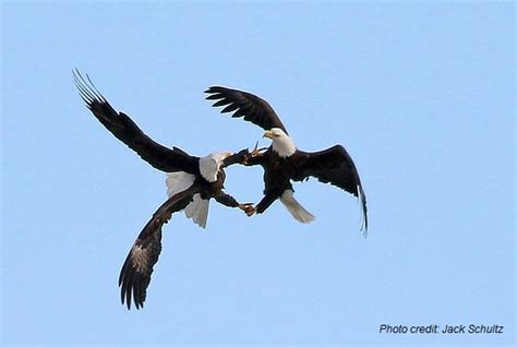 love is in the air february is mating season for many