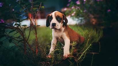 Puppy Dog 4k 1080p Sits Uhd Hdtv