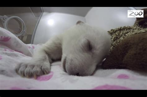 sleeper baby this baby polar is a really loud sleeper