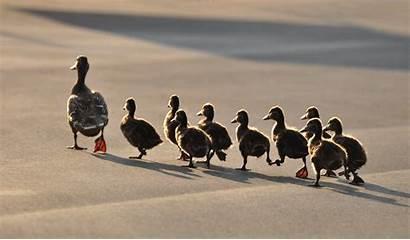 Follow Following Others Followed Followers Restitutio Follower