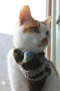 bird for cats cats birds and friends on