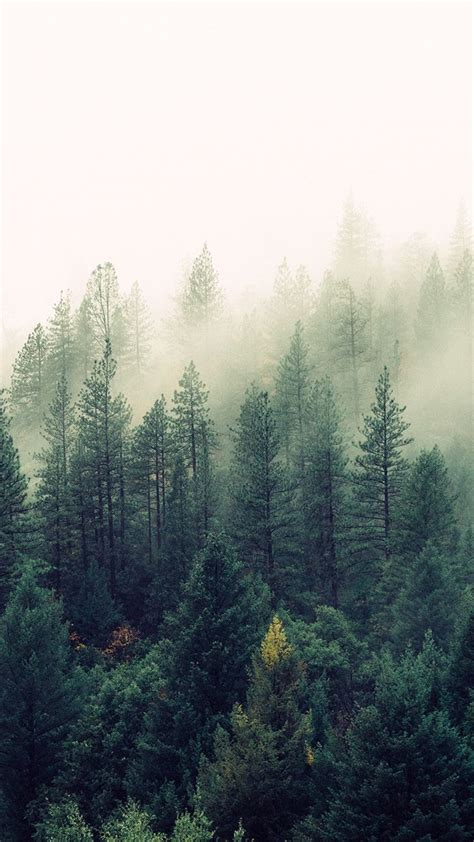 foggy forest   nature inspired iphone