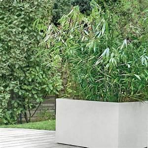 Bambou En Pot Pour Terrasse : bambou moyen fargesia 39 pingwu 39 plantes et jardins ~ Louise-bijoux.com Idées de Décoration