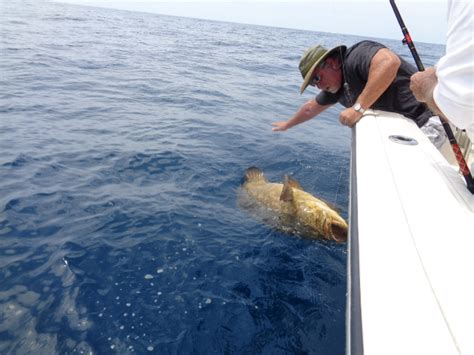 grouper goliath reel rod season amberjack tampa bay help favorite reply desoto ars caught spots ft near around were they