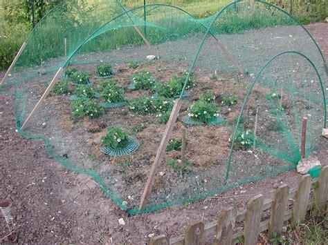filet oiseau fraisier au jardin forum de jardinage