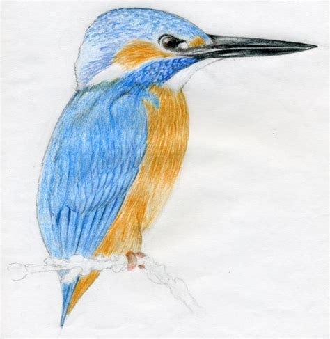 Best Draw Birds Ideas And Images On Bing Find What You Ll Love