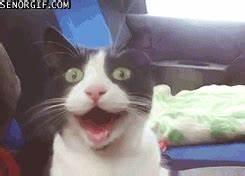 Gifs animados de gatos graciosos para compartir con tus ...