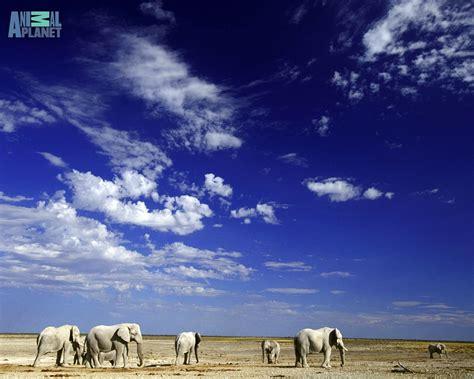 animals zoo park elephant wallpapers  desktop