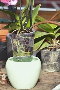 Comment Soigner Une Orchidée : comment soigner une orchid e photo de fleur une pensee ~ Farleysfitness.com Idées de Décoration
