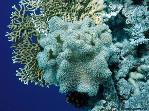 coral polyp dying ocean eyes impacts