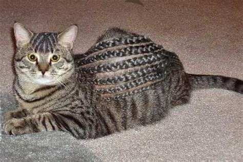 clip jobs  top  weird  bizarre dog cat haircuts