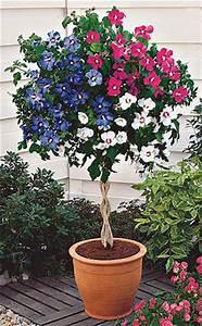 Kübel Bepflanzen Winterhart : pflanzkalender april ~ Michelbontemps.com Haus und Dekorationen