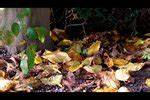 Ameisen Im Haus Ursache : video kakerlaken entfernen so bek mpfen sie die sch dlinge ~ A.2002-acura-tl-radio.info Haus und Dekorationen