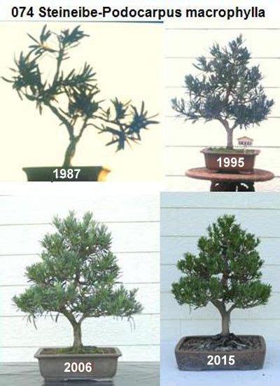 Bonsai Bäume Pflege 3243 by Pin Sebastian Biegi Auf Bonsai Bonsai Baum Bonsai