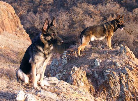 File Ee  German Ee   Shepherds In Ravine Jpg Wikimedia Commons